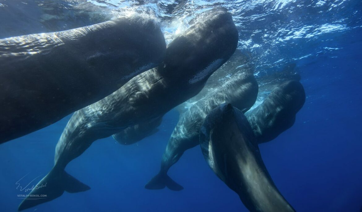 Believed to Be Solitary, Male Sperm Whales Actually Hang With the Boys – In Friendships That Can Last Years